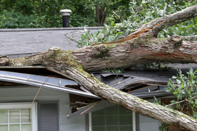 How Can Trees Hurt Your Roof