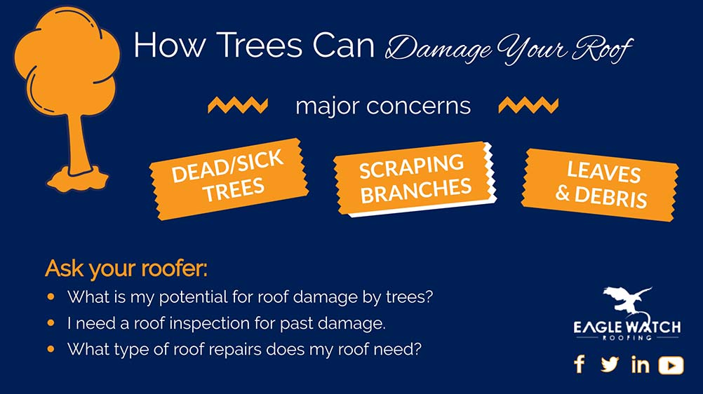 Can Trees Hurt Your Roof [infographic]